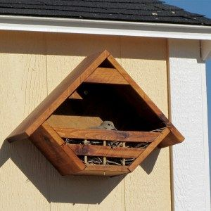dove bird house